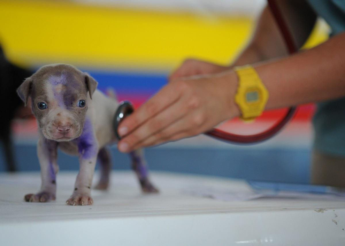 cachorro diseño web para veterinarios y clínicas veterinarias diseño web en wordpress barcelona badalona go comunicació